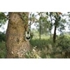 Picture of Wildlife Camera 12.0 MPixel GPRS